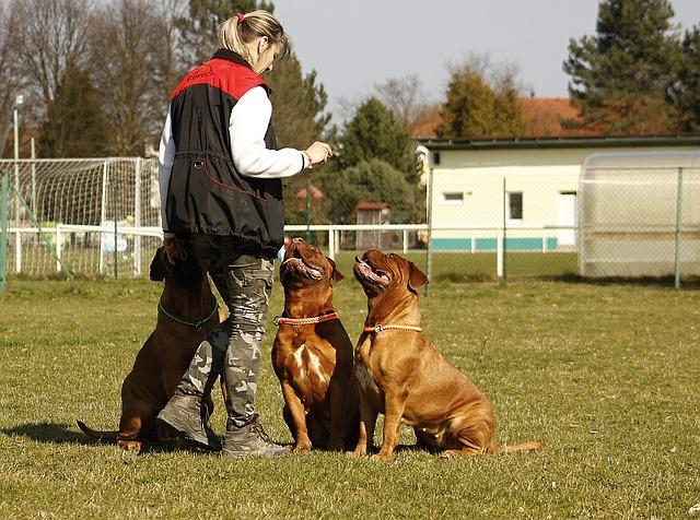 cvičitelka psů.jpg